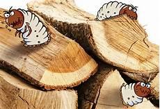was tun bei holzw 252 rmern im brennholz