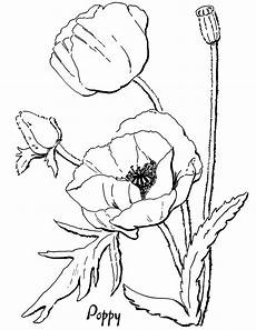 poppy coloring page for adults the graphics