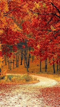 Iphone Xs Wallpaper Autumn