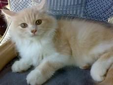 Kucing Makanan Jenis Dan Cara Perawatannya