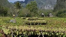 bio tabak und fair trade zigaretten evidero