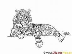 tiger kostenlose malvorlage f 252 r erwachsene zum ausdrucken