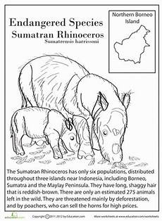 endangered animal worksheets 14298 endangered species sumatran rhinoceros worksheet education