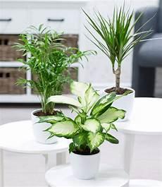 Echter Zimmerpflanze Kaufen - zimmerpflanzen mix classic 1a zimmerpflanzen