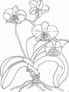 orchidee viele ausmalbild malvorlage blumen