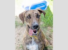 RSPCA QLD   Adopt Search