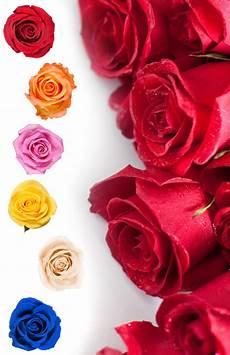 Langage Des Roses Signification Nombre De Roses Interflora