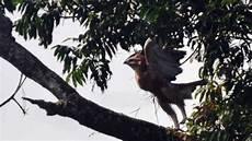 Paling Bagus 14 Gambar Burung Garuda Asli Gani Gambar