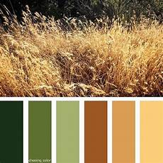 shades of golden wheat photo credit kaite chasingcolor colorthemes colorful shades