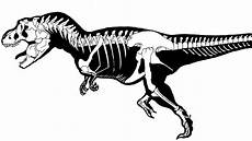 t rex skeleton dinosaur coloring pages skull coloring