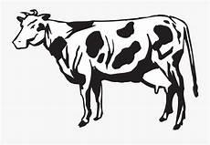Cow Livestock Cattle Gambar Sapi Perah Hitam Putih