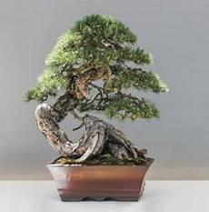 Bonsai Baum Kaufen Alles Zum Thema Bonsai Baum