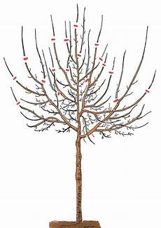 Pflaumenbaum Richtig Schneiden Mit Bildern