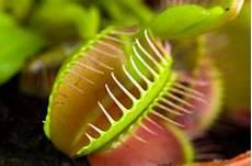 fleischfressende pflanzen pflegen bekannteste arten