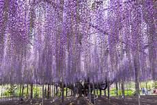 Die Schönsten Gartenbäume - der h 246 chste der 228 lteste die b 228 ume der superlative