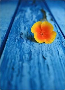 blue complimentary colors by g kleur kunst blauw oranje en kleurenleer