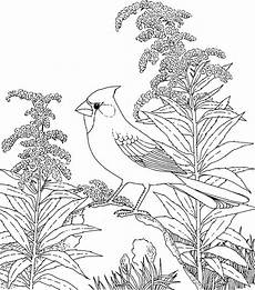 realistic coloring pages for adults coloring pages of backyard birds bird coloring pages