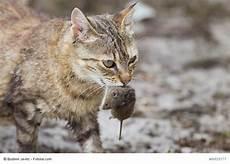 Katzenfutter Mit M 228 Usegeschmack Haustiermagazin