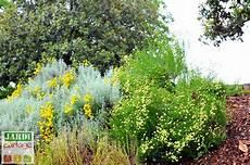 quelle plante pour talus choisir 10 choix jardipartage