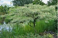 Der Hausbaum Welcher Darf Es Sein Gartenzauber