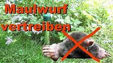 was hilft gegen maulwurf was hilft gegen maulwurf und w 252 hlm 228 use w 252 hlmausvertreiber