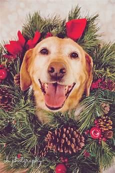 holiday dog dog holiday holiday dog photos dog christmas photos