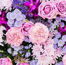 sfondo a fiori sfondi di fiori colorati sfondi