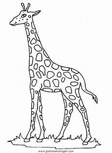 giraffen 43 gratis malvorlage in giraffen tiere ausmalen