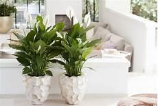 Forgiving Houseplants The Of Plants