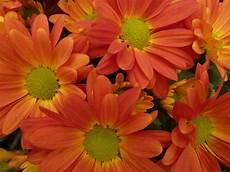 Gambar Bunga Orange Gambar Bunga