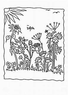 Ausmalbild Schmetterling Wiese Ausmalbilder Malvorlagen Blumenwiese Kostenlos Zum