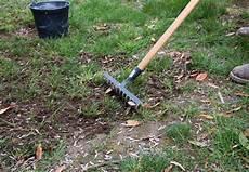 enlever mousse gazon rateau comment refaire une pelouse ab 238 m 233 e conseils coaching