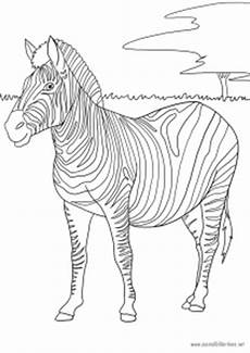 zebra als malvorlage ausmalbilder pferde viele