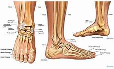 Anatomical Foot Diagram by Norcal Foot Ankle The Leader In Foot Ankle Care In