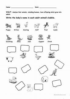 animals and their ones worksheet free esl printable worksheets made by teachers