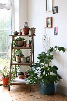 Living Room Home Decor Ideas With Plants by House Plants Succulents Cactus And Indoor Gardens