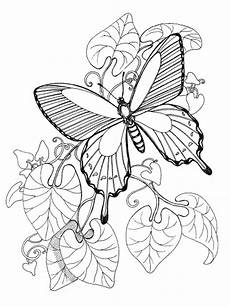 Ausmalbilder Schmetterling Ausdrucken Page Butterfly Coloring Pages Printable Colouring