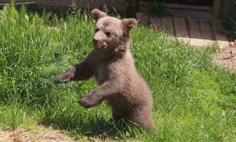 After Bear Cub Was Rescued From Life In A Basement, Watch