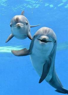 malvorlagen unterwasser tiere um delfine tiere meerestiere flauschige tiere