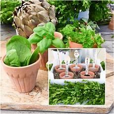 Mein Kleiner Biogarten - so pflanzt ihr euren eigenen kleinen bio garten auf dem