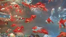 fische haltung und pflege 187 tiere de