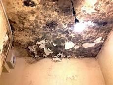 décaper peinture mur moisissure murs et plafond r 233 novation
