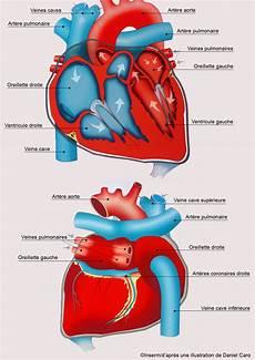 l infarctus du myocarde d 233 finition sympt 244 mes
