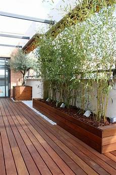 Balkon Sichtschutz Ideen - sichtschutz pflanzk 252 bel sichtsch 252 tze k 246 nnen auch