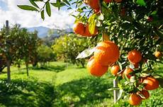 Foodie Guide To Arance Oranges Italy Magazine