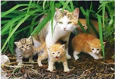 Malvorlage Katze Mit Jungen Warrior Cats Welche Katze Bist Du