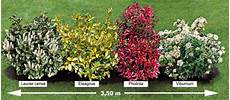 Photo La Plantes Jardins Haie Persistant Et Arbuste