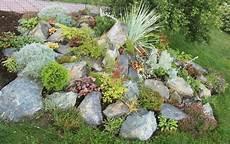 Gartenbeet Mit Steinen Anlegen - steingarten pflanzen zwischen steinen auswahlen