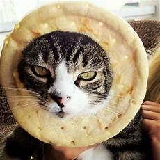 7 Situs Berisi Kucing Yang Konyol Lucu Gemesin Dan