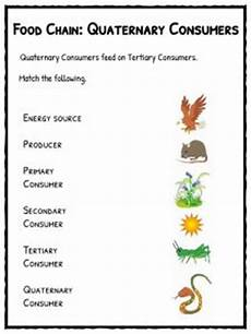plants as producers worksheets 13617 food chain facts worksheets species energy pdf resource